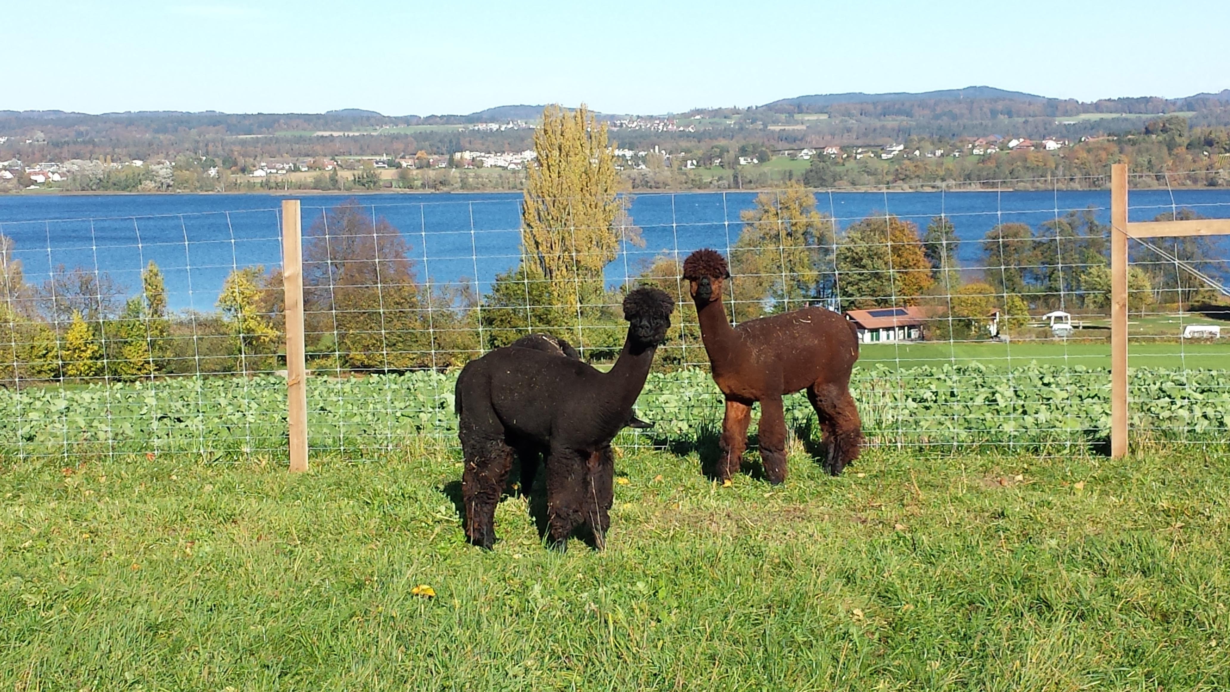 Caruso und Adonis mit dem Greifensee im Hintergrund